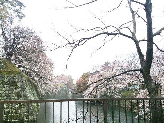 駿府城の桜
