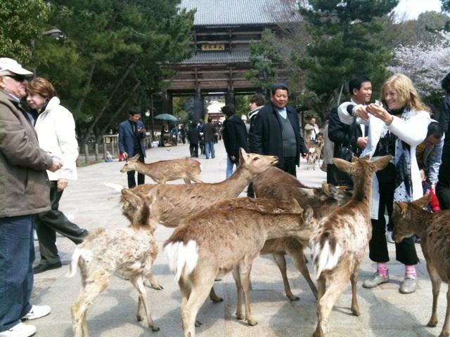 奈良にて…